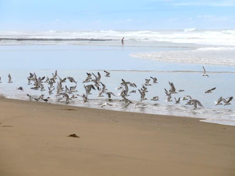 Flock of birds flying over the beach